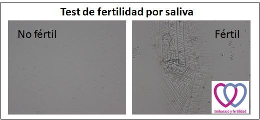 test de fertilidad por saliva EyF